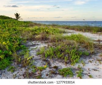 Beautiful tropical caribbean beach at dusk, located in South Florida