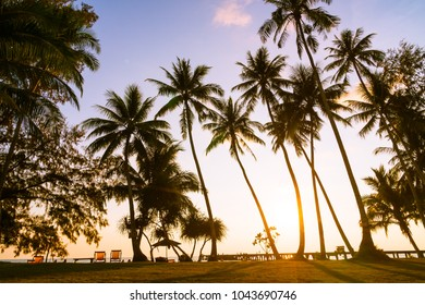 Beautiful tropical coconut palm tree  on sky with sea and beach - Vintage Filter
