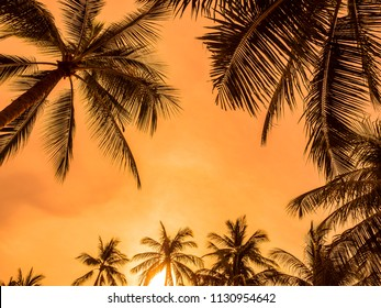 Beautiful tropical coconut palm tree on blue sky background