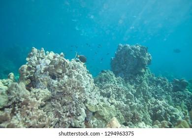 Beautiful Tropical Coral Reef Landscape