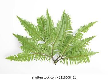 Beautiful tropical fern leaf on white background - Shutterstock ID 1118008481