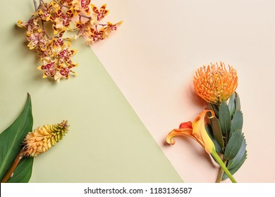 Beautiful tropical flowers on color background