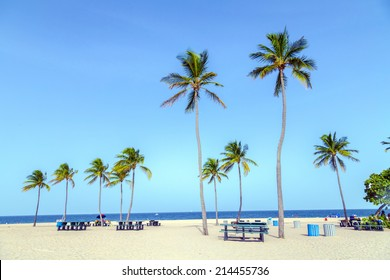beautiful tropical  Fort Lauderdale beach with coconut trees