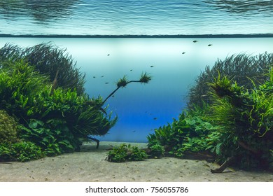 Beautiful Tropical Freshwater Aquarium with Green Plants and Fishes