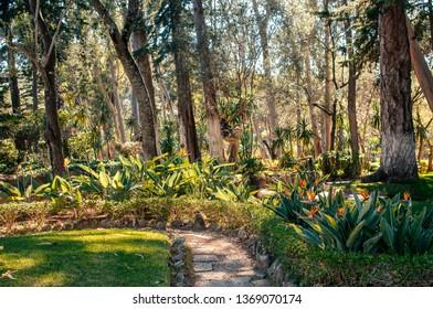 Beautiful tropical garden in Cascais, Portugal