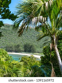 Beautiful tropical island view of North Bay Beach on Lord Howe Island, New South Wales, Australia, seen through subtropical forest with a palm tree. Sunny day, clear water.