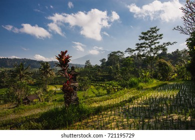 Beautiful tropical landscape with Agung mountain on the background, Sidemen village, Bali island, Indonesia