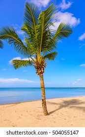 Beautiful tropical landscape of the Atlantic Ocean palm against the skyPalm Ocean Sky
