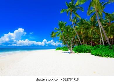 Beautiful tropical landscape of the Atlantic Ocean palm trees against the sky. Palm Ocean Sky