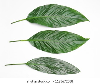 Beautiful tropical leaves on light background, top view