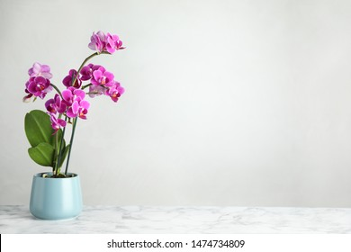 Beautiful tropical orchid flower in pot on marble table against light background. Space for text