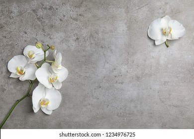 Beautiful tropical orchid flowers on grey background, top view. Space for text