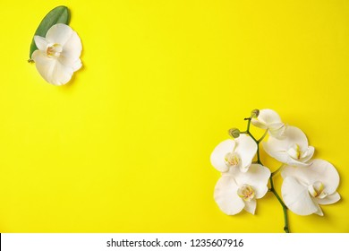 Beautiful tropical orchid flowers on color background, top view. Space for text