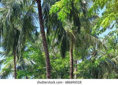 Beautiful tropical palms at resort