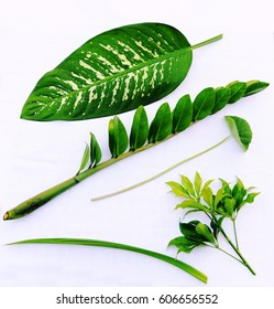 Beautiful of tropical plant leaves on white background. Nature design and texture.