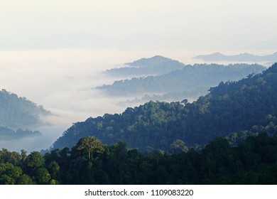 Beautiful Tropical rainforest, Mountain Range shrouded in morning mist in a scenic landscape view.