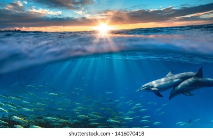 Beautiful tropical sea underwater background with traveling dolphins in blue water