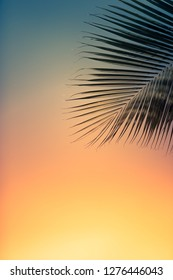 Beautiful tropical sunset against palm leaves background.