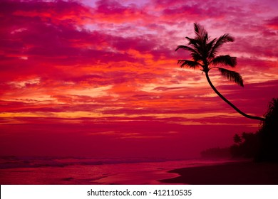 Beautiful tropical sunset beach with palm tree silhouette over the water