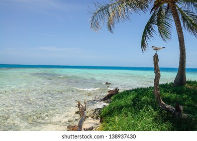 Beautiful Tropical Waters on the Coast of Belize, Central America