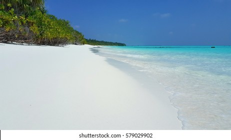 Beautiful tropical white sandy beach with green tree background