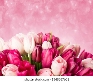 Beautiful tulip flowers on abstract background with blurred lights