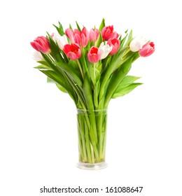 Beautiful tulips isolated on white background