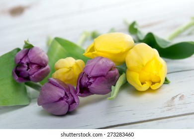 beautiful tulips on a wooden background / Tulips