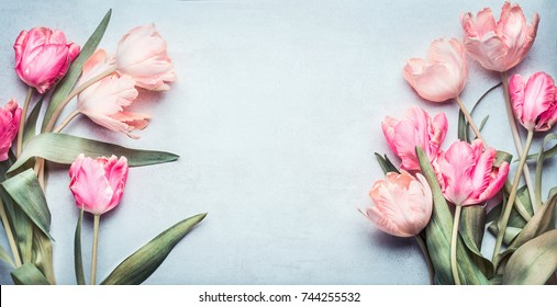 Beautiful tulips in pink pastel color on light blue background, top view, frame, border. Lovely greeting card with tulips for Mothers day, wedding or happy event