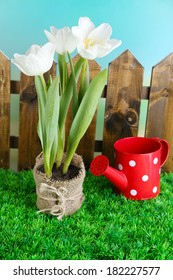 Beautiful tulips in pot  on green grass, on bright background