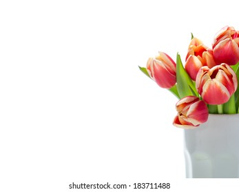 Beautiful tulips red and orange in white vase Isolated on white background