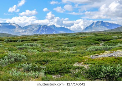 Beautiful tundra landscape view with mountains in the horizon at summer. Dovrefjell–Sunndalsfjella National Park, Norway. Wild untouched environment of plateau.