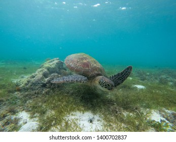 Beautiful turtle captured underwater in Moalboal, Philippines (Cebu Island)