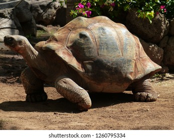 Beautiful turtle, reptile animals