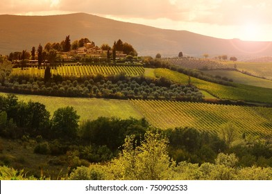 Beautiful Tuscan landscape at sunset with olive trees, cypress and vineyards near Castellina in Chianti, Siena. Italy.
