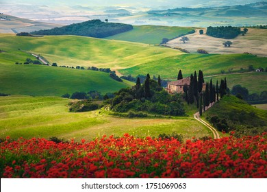Beautiful Tuscany countryside landscape with flowery meadows. Spectacular red poppy flowers in the grain fields and rural buildings on the hills, Tuscany, Italy, Europe