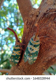 The beautiful twin elephant weevil on the tree in nature