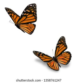 Beautiful two orange monarch butterfly, isolated on white background