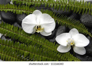 Beautiful two white orchid and stones with green fern