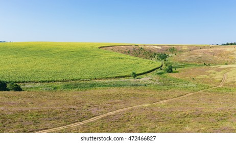 beautiful Ukrainian landscape. rural road is in the green hills. sunny day. on the sides of the road visible bushes and trees