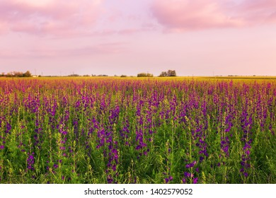 Beautiful uncultivated field with colorful flowers