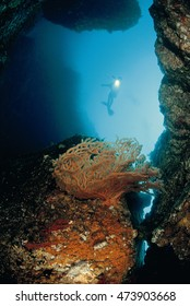 Beautiful under the sea