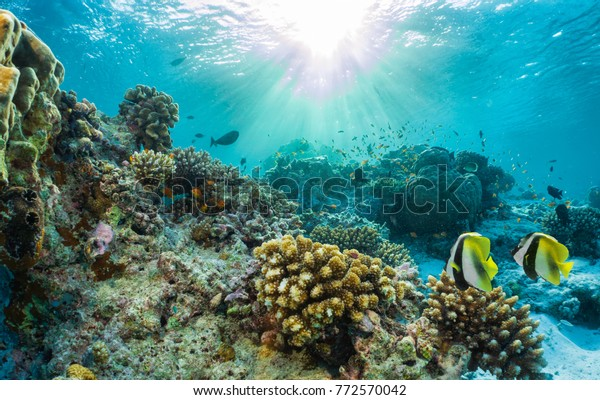 Beautiful underwater coral reef with tropical fish in the Maldives