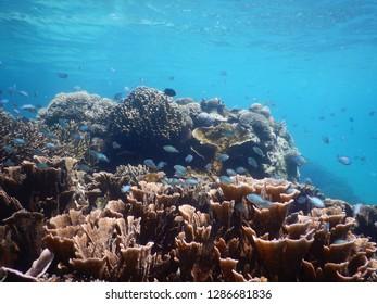 Beautiful underwater in Komodo National Park, Labuan Bajo Indonesia