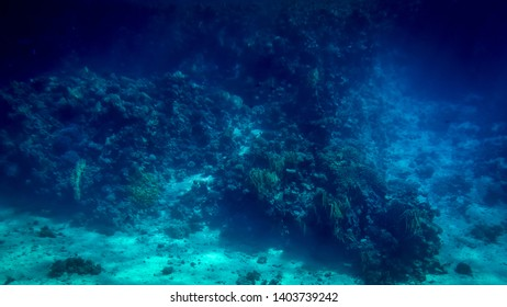Beautiful underwater photo of colorful tropical coral reef on the Red sea bottom