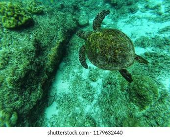 Beautiful underwater postcard habitat nature .Similan sea turtle floatting up and over coral reef.snorkeling in similan,Thailand.In deep blue background