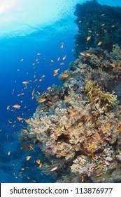 Beautiful underwater tropical coral reef scene