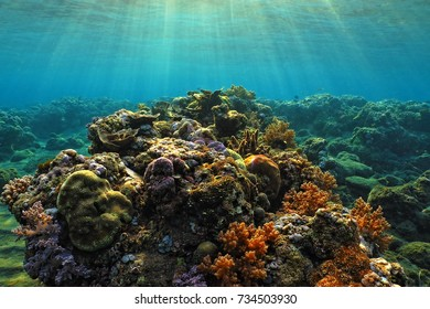 Beautiful underwater tropical coral reef with sun rays. Different sea corals under the sun light. Scuba diving in the shallow water with underwater life and sun beams. Adventure ocean trip.