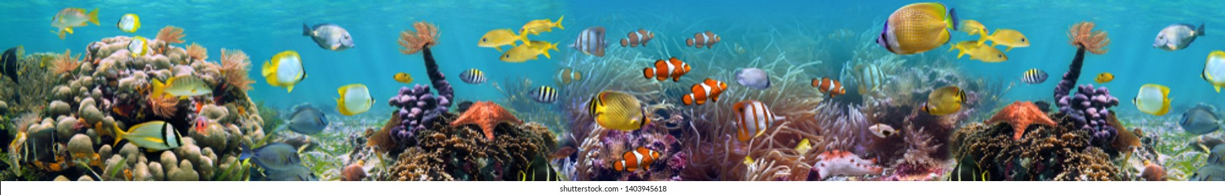 Beautiful underwater world coral reef panorama landscape. Horizontal banner. High quality image for glass panels (skinali).