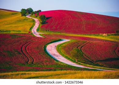 Beautiful unusual summer landscape. Agricultural fields and flowers blooming in red